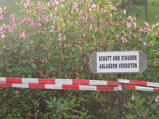 Neophyten werden oft unabsichtlich über Gartenabfälle verbreitet. Bei invasiven Neophyten, deren Bekämpfung oft aufwändig ist, ist dies besonders problematisch.